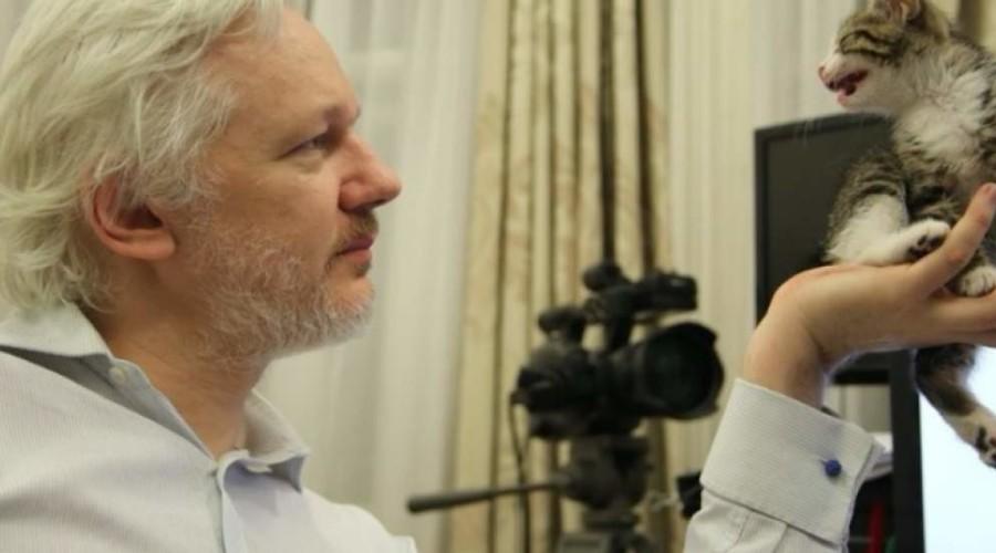 Wikicat de Julian Assange