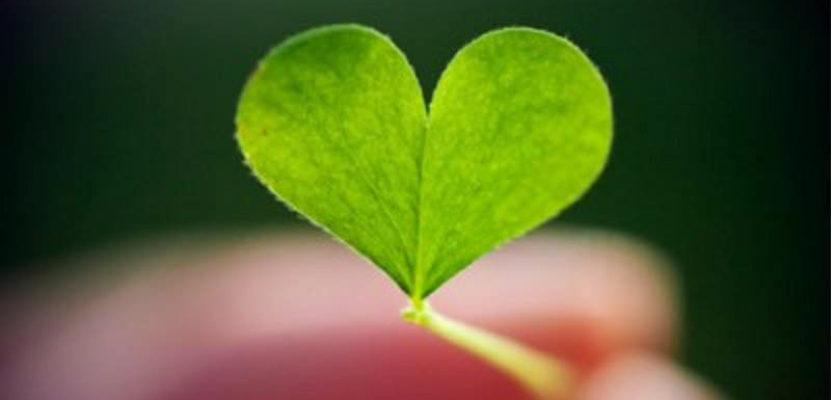 Sabiduría y amor por la naturaleza
