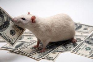 Ratas, rateros y banqueros