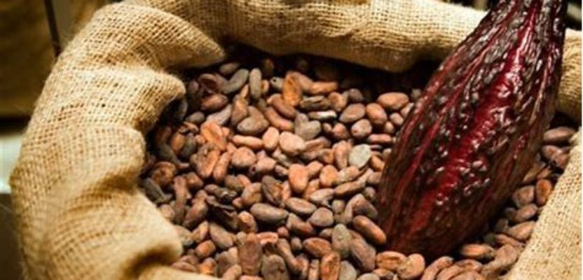Cacao ecuatoriano: historia e identidad