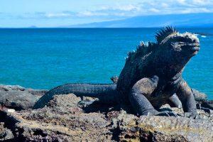 ¿Islas Galápagos, una base militar norteamericana?