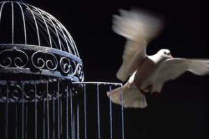 """Derecho a la intimidad y """"libertad de expresión"""""""