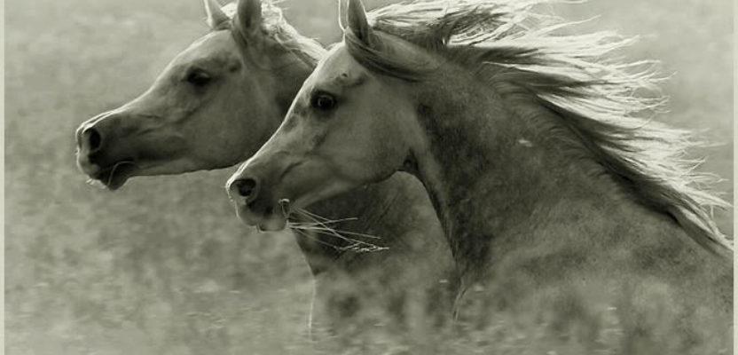 Los caballos de Alberti