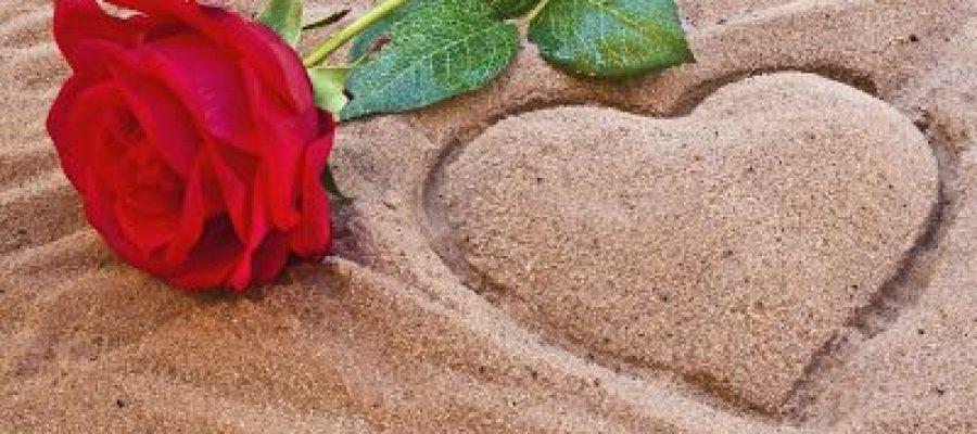 Una rosa al borde del corazón